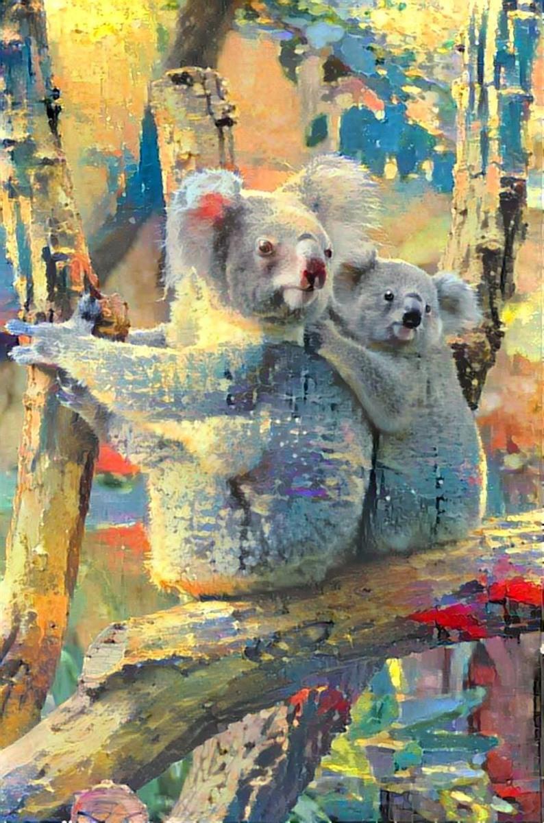 Koala _6411
