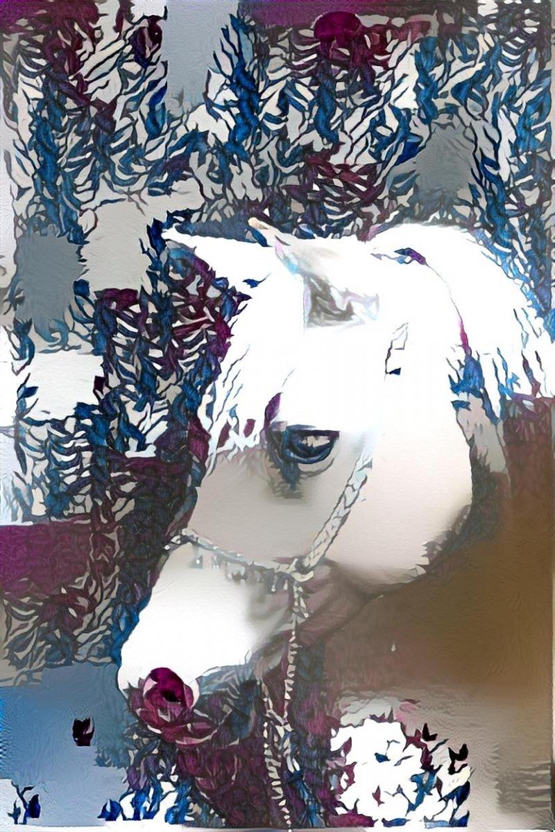 Horse_6456