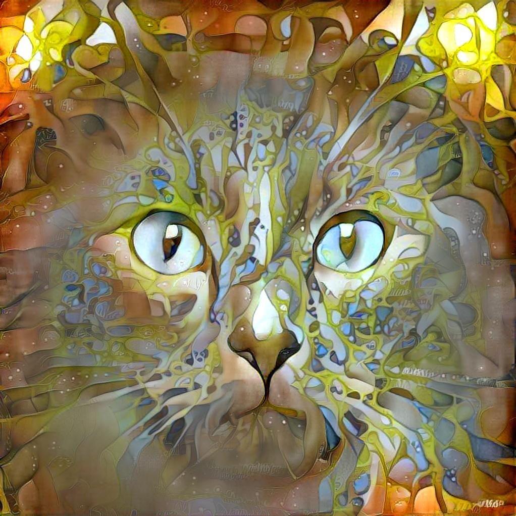 Cat_6471