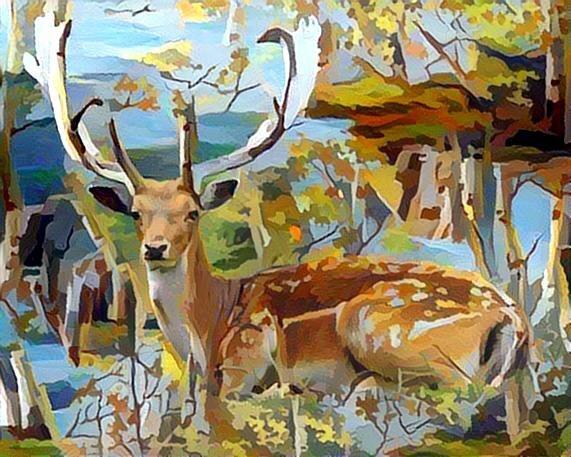 Deer_6484