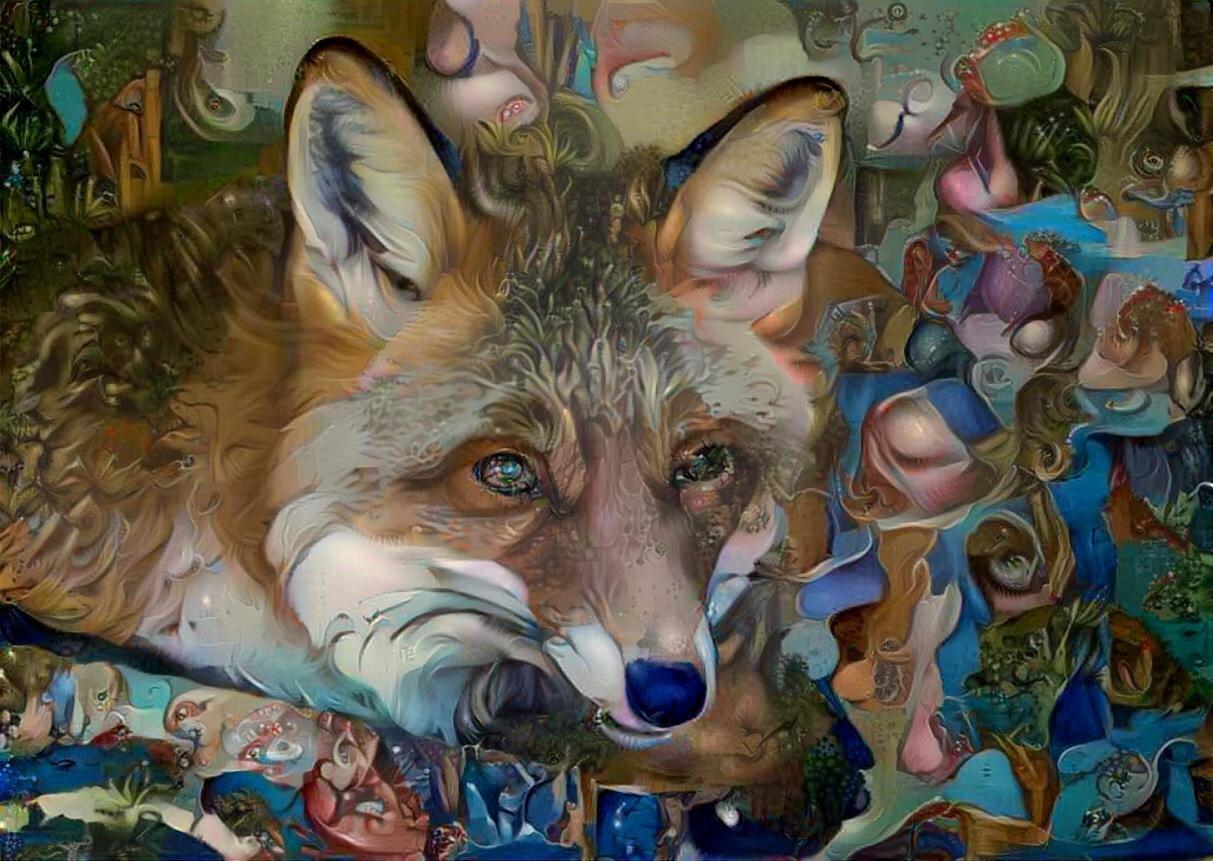 Coyote _6499