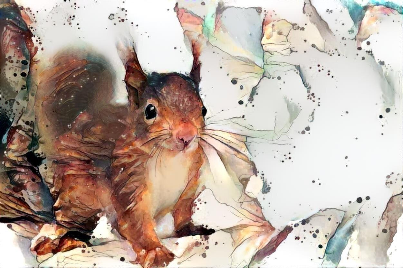 Squirrel _6507