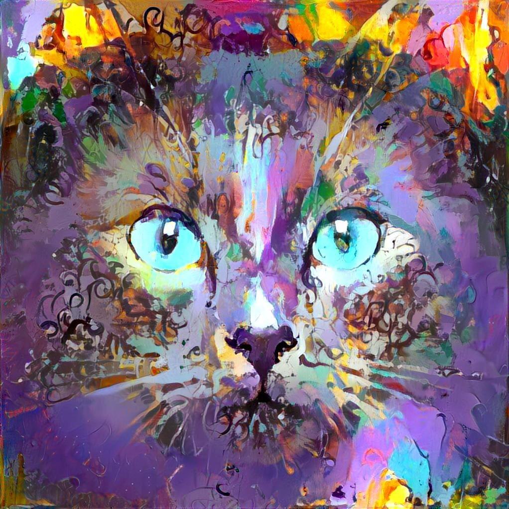 Cat_6538