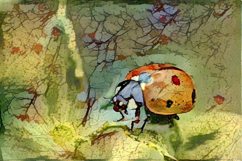 Ladybug _6539