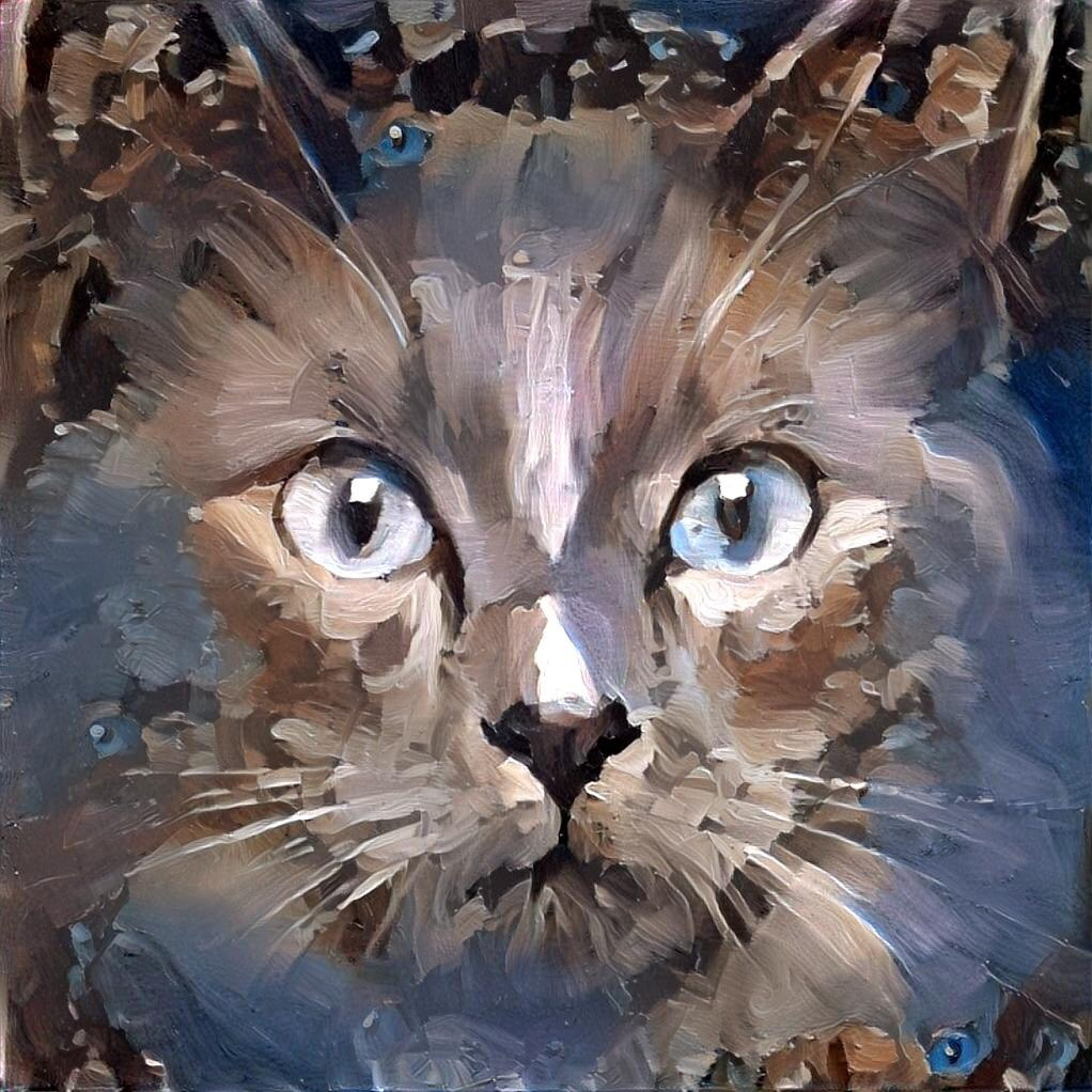 Cat_6674