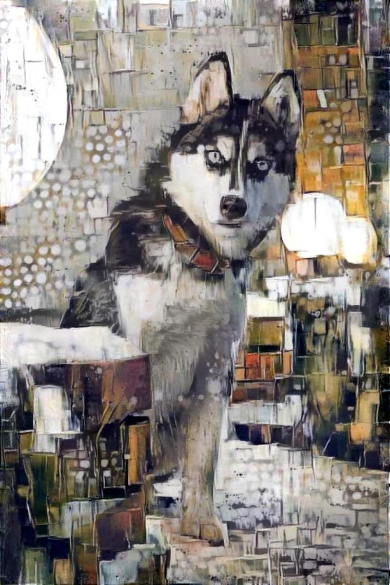 Dog_6693
