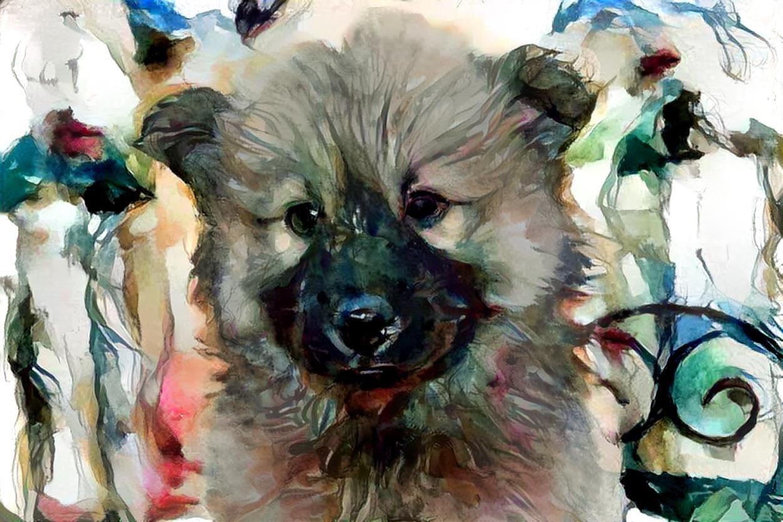 Dog_6721