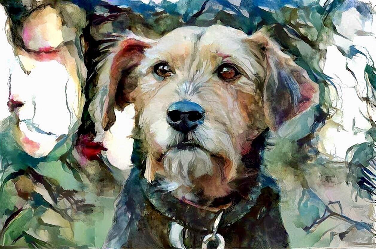 Dog_6722