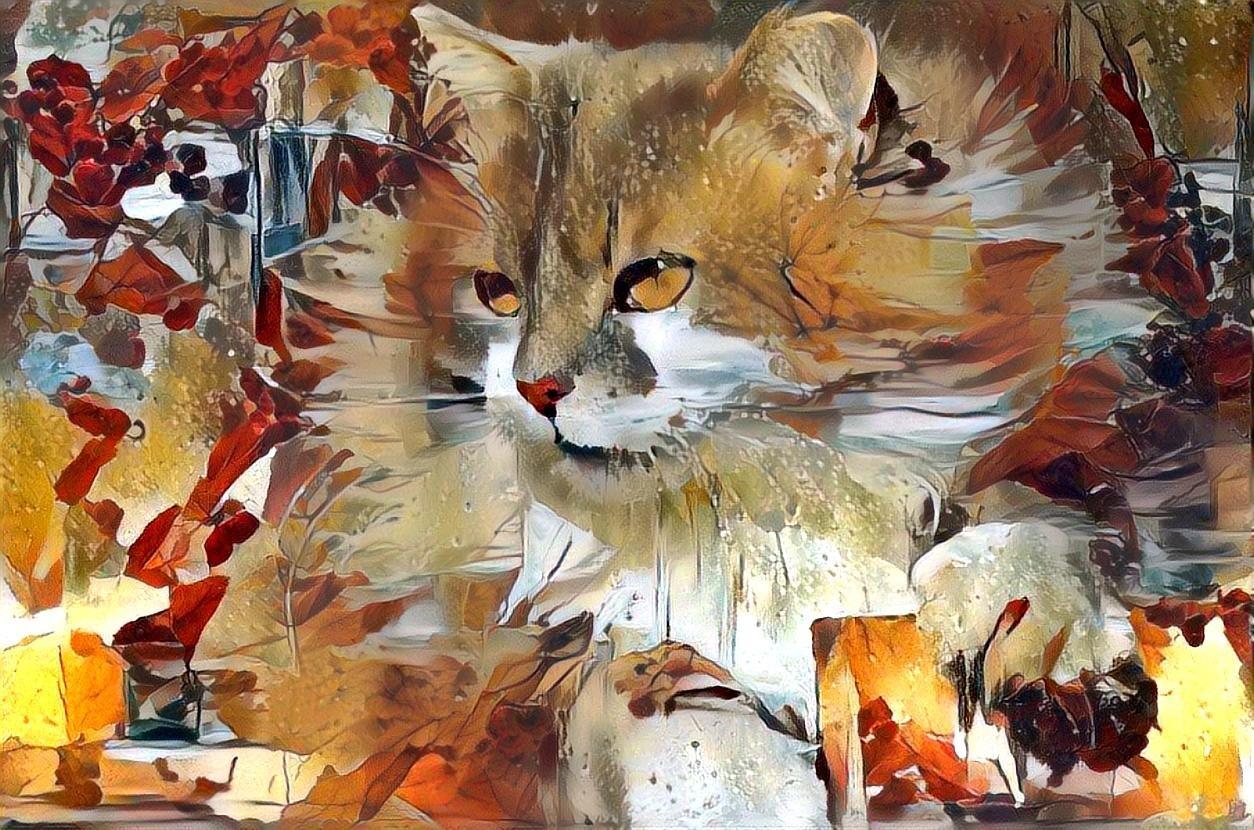 Cat _6795
