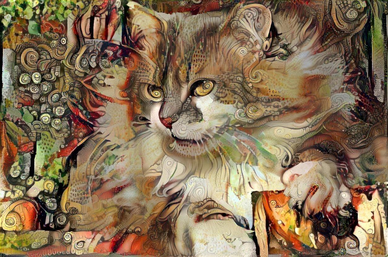 Cat_6801