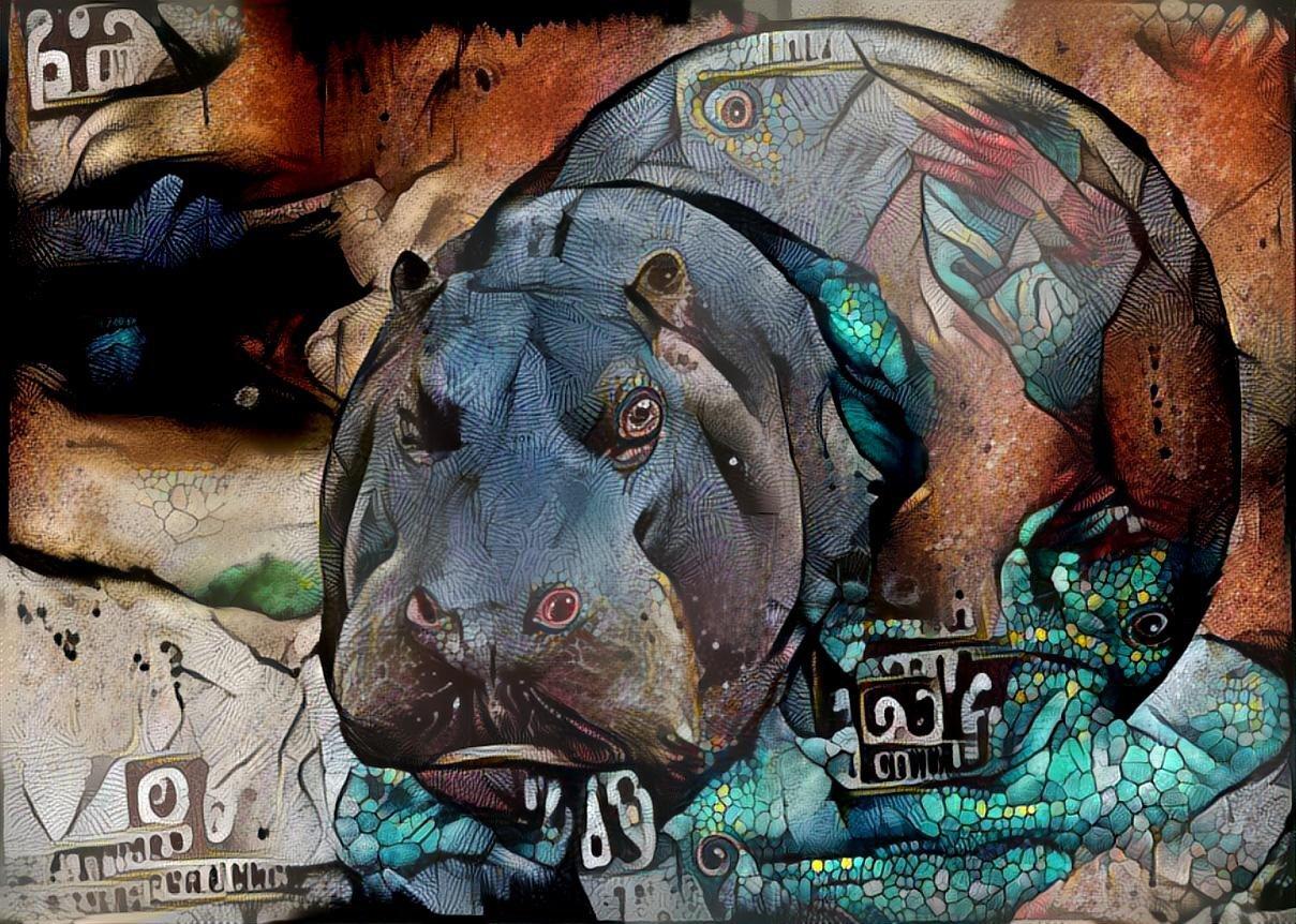 Hippo_6802