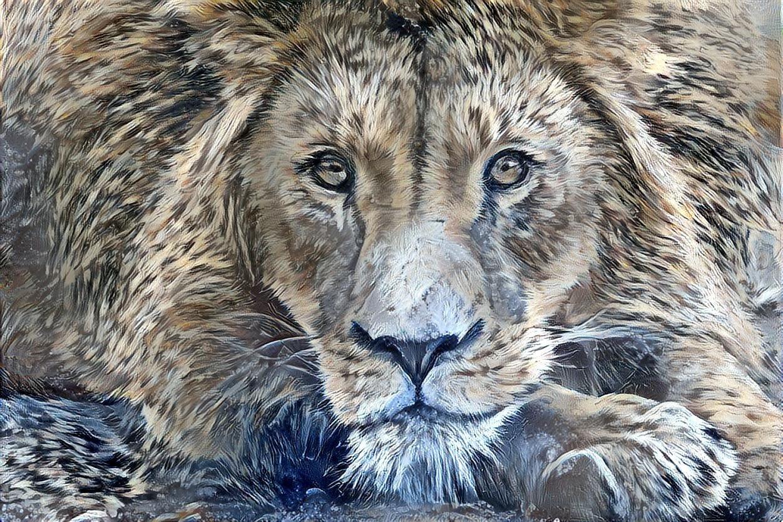 Lion_6851