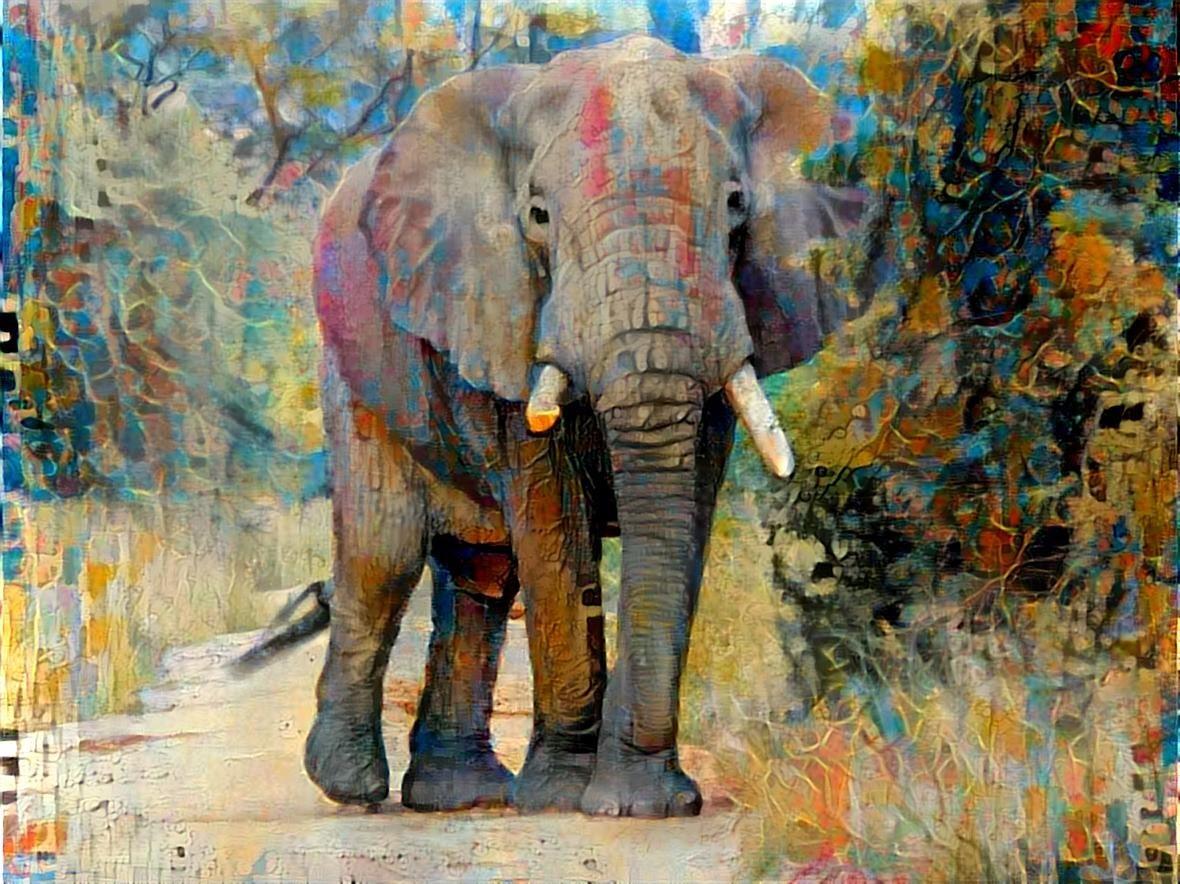 Elephant_6852