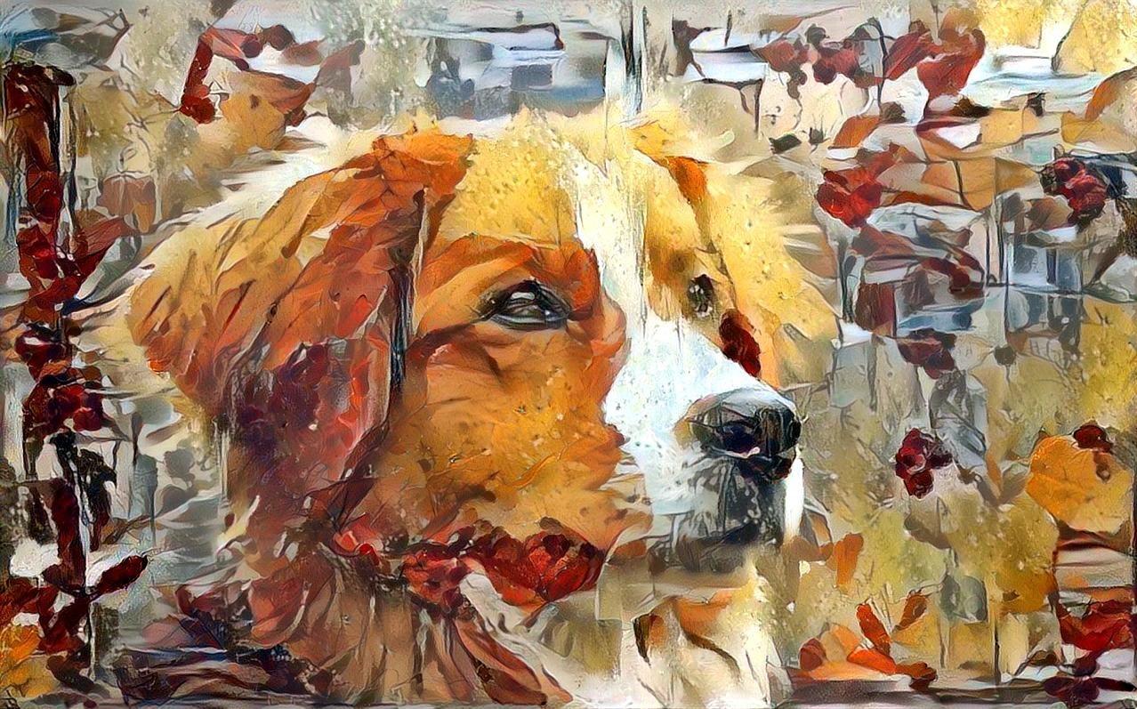 Dog_6907