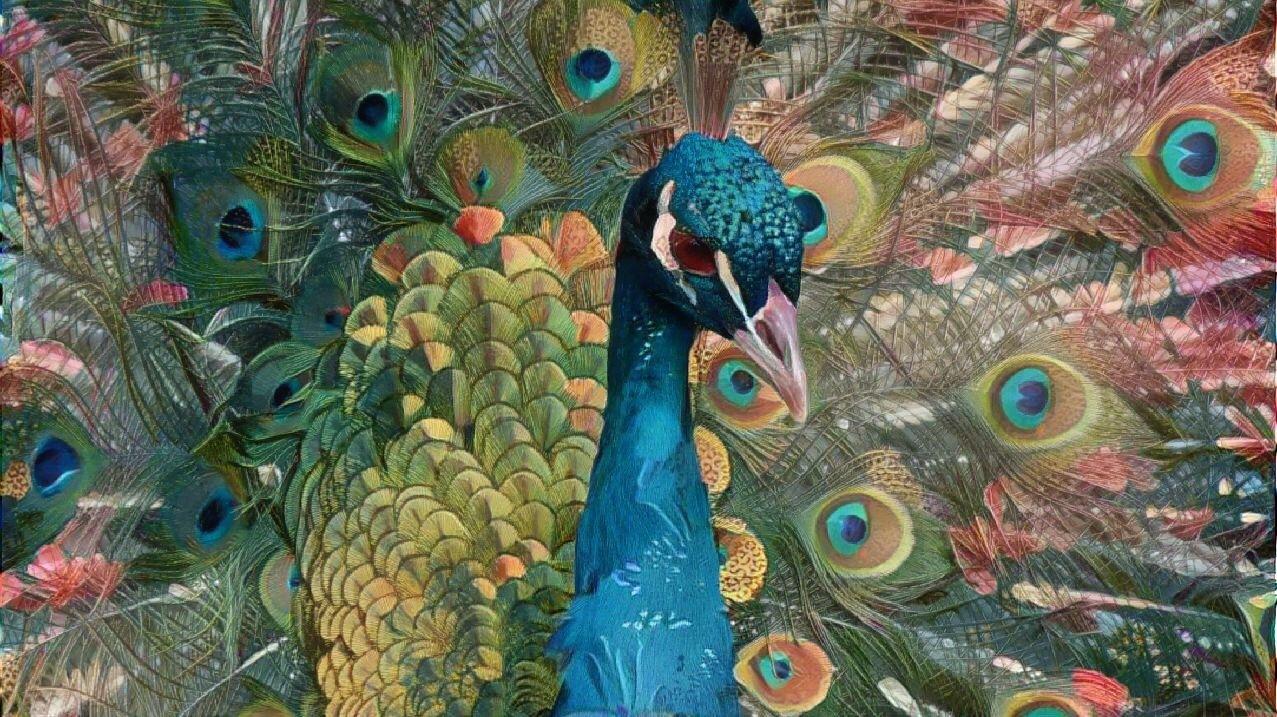 Peacock _6934