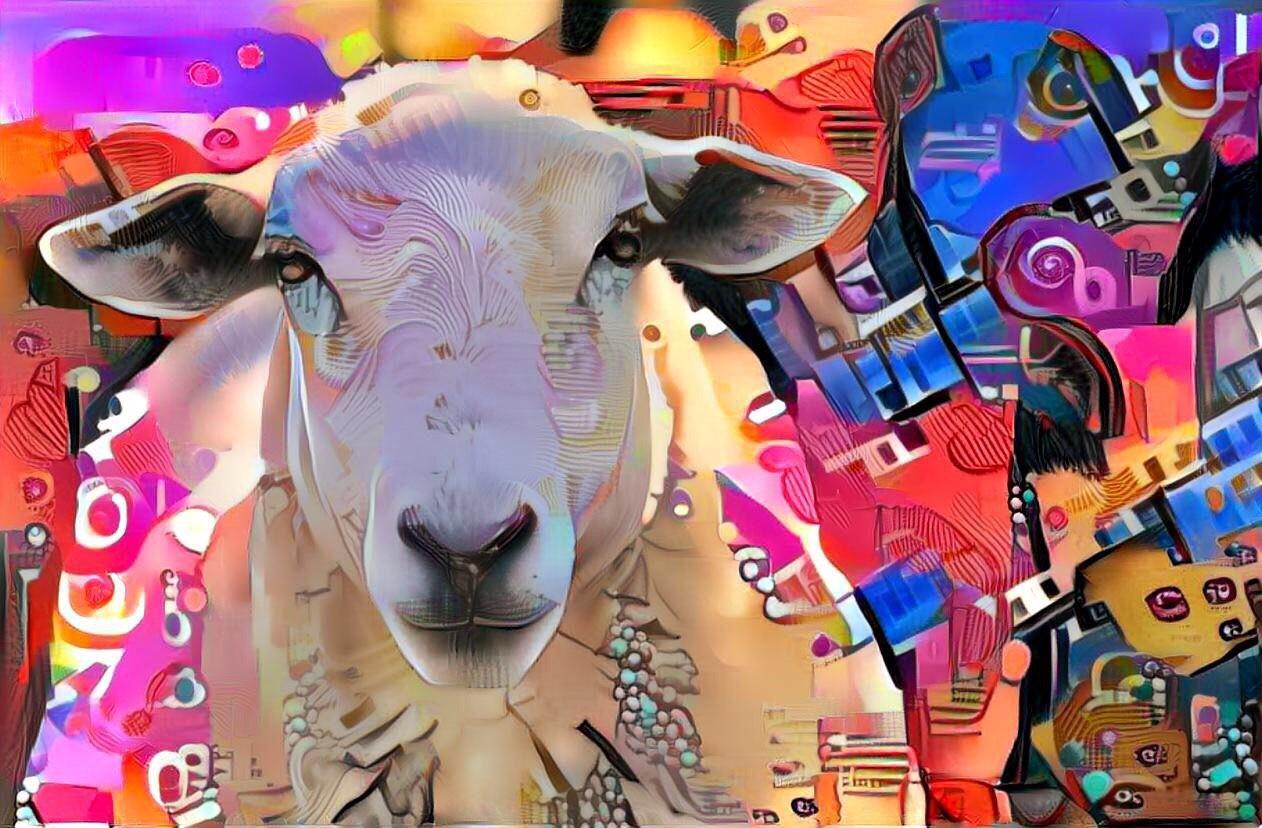 Sheep_6992