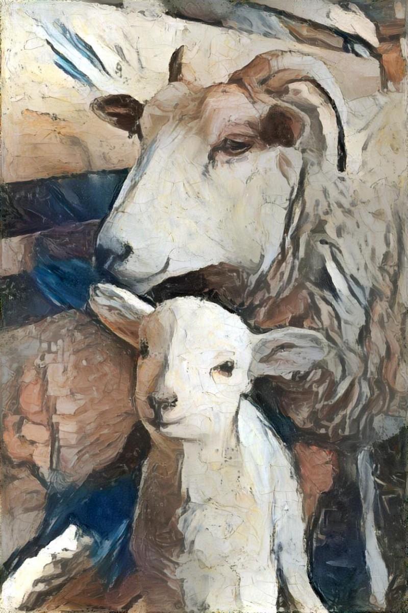 Sheep_7006