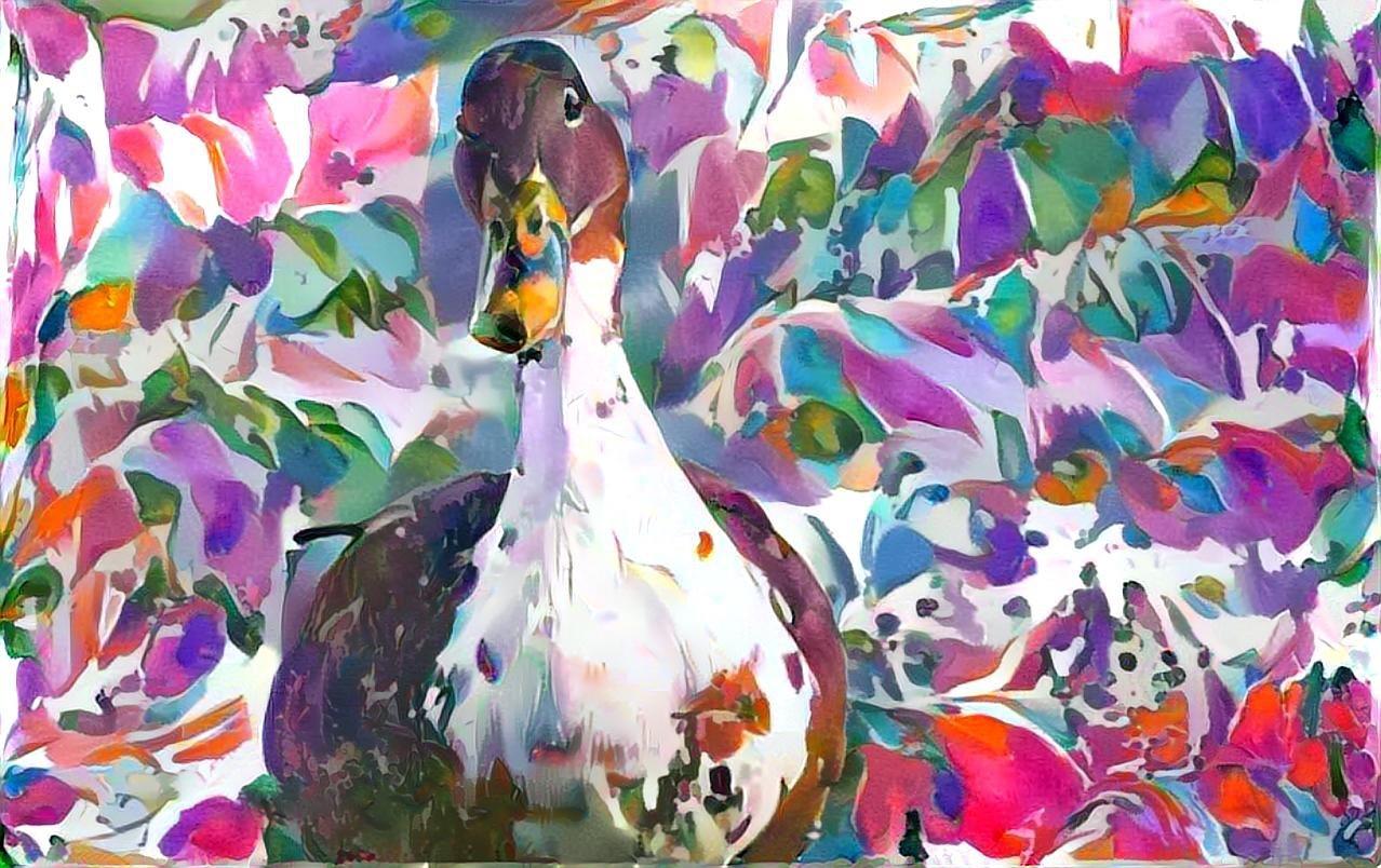 Duck_7048