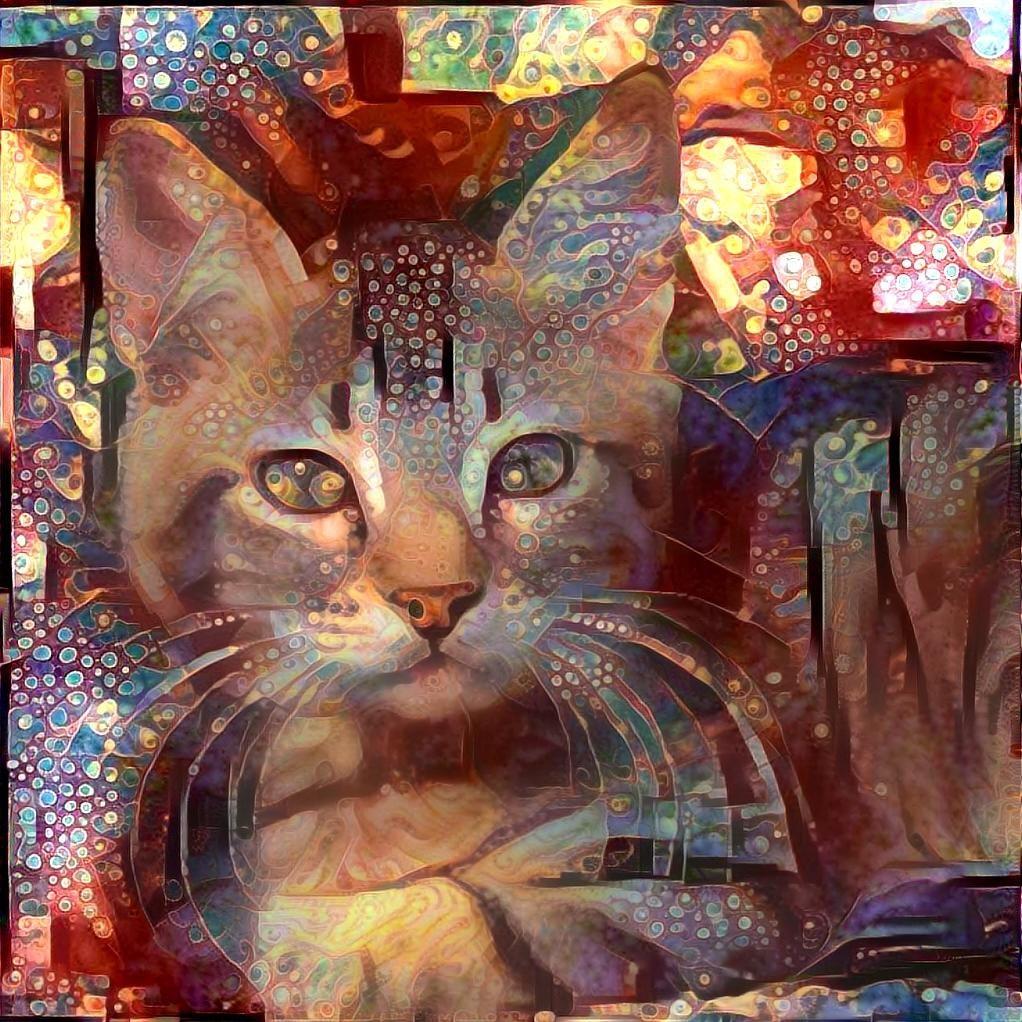 Cat_7049