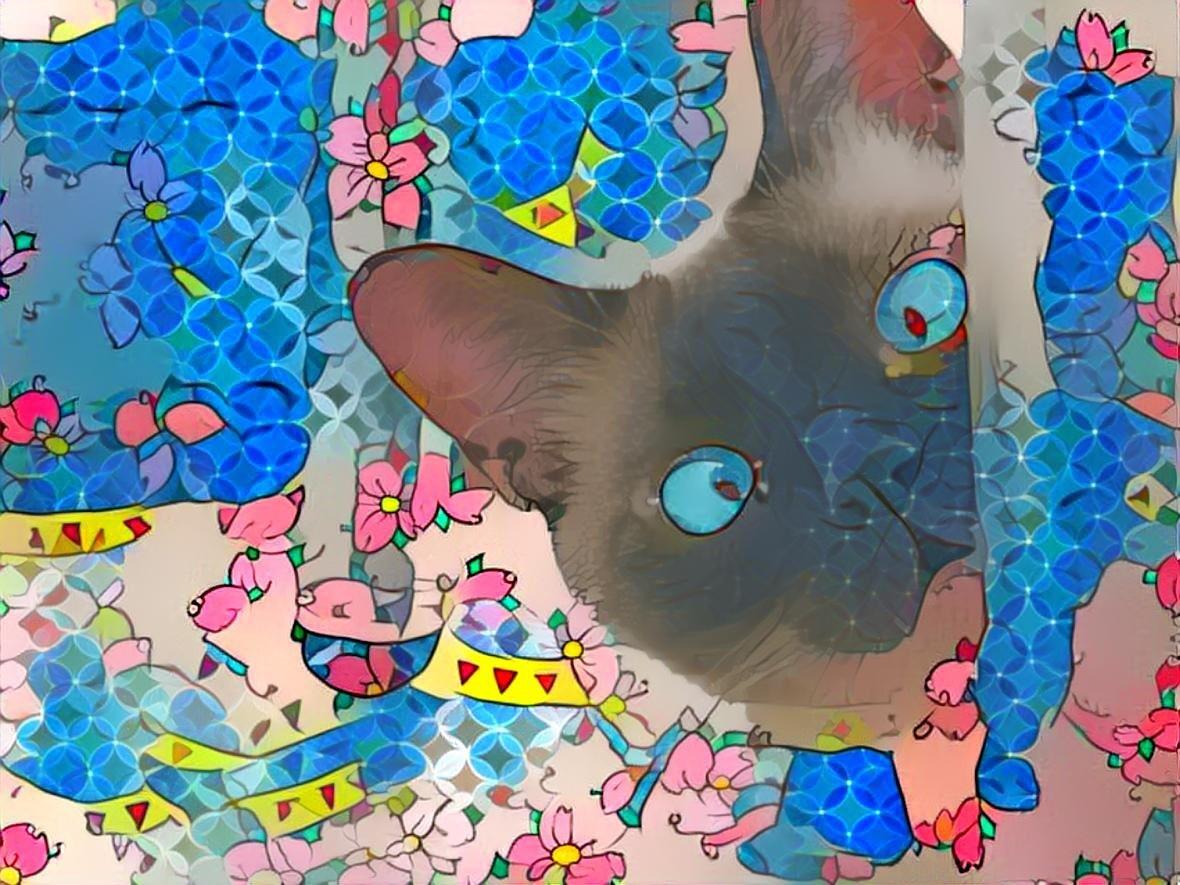 Cat_7054