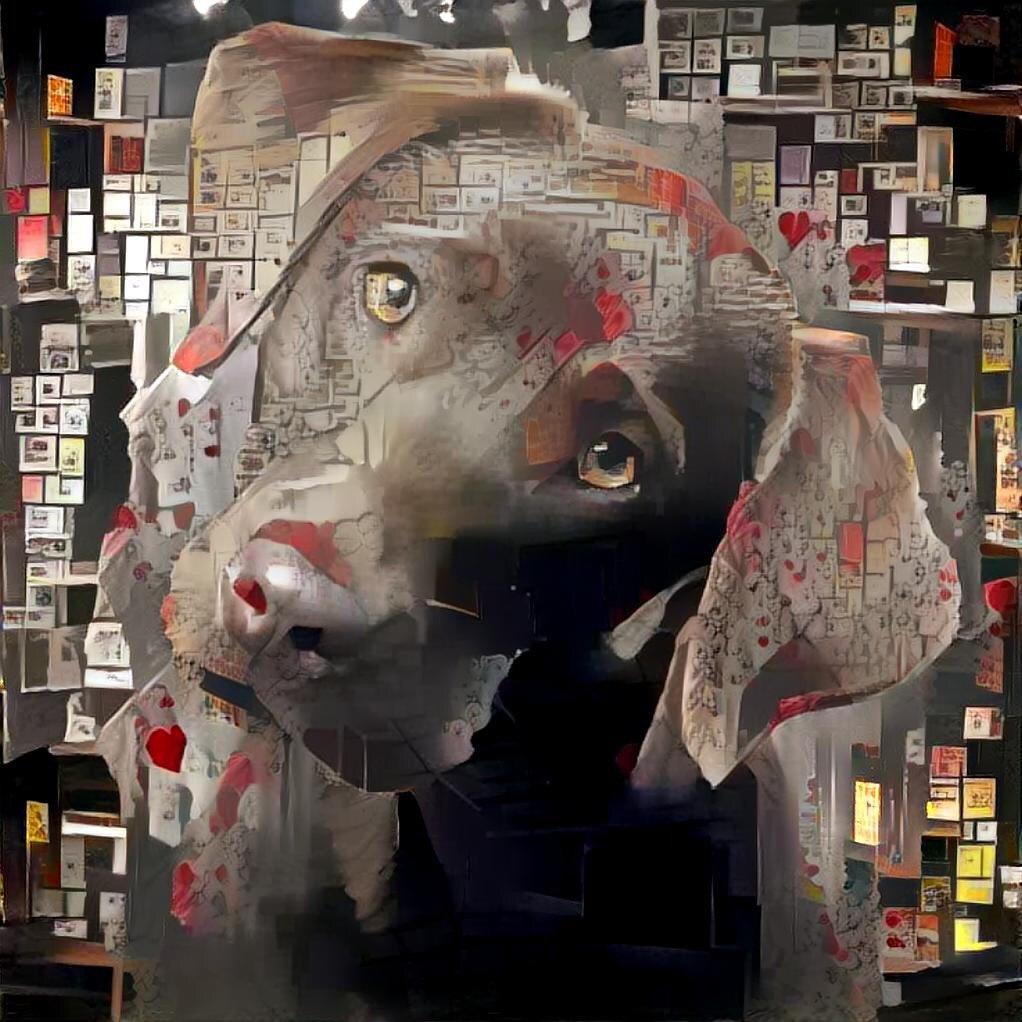 Dog_7055