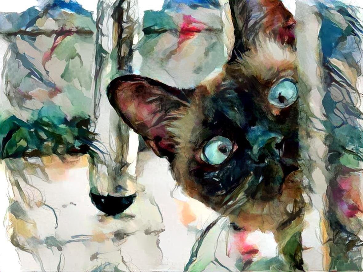 Cat_7057