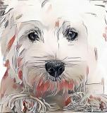 Dog _1808