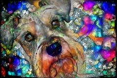 Dog _3548