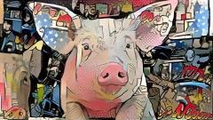 Pig_3679