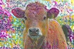 Cow_3680