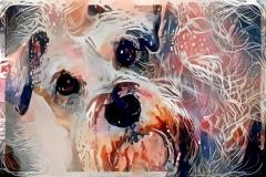Dog_3684