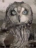Owl_3710