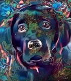 Dog_3839