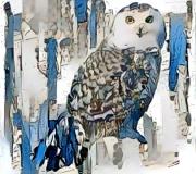 Owl_3846