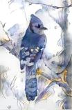 Bird, Jay_4007