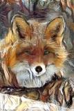 Fox_4259