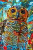 Owl_4284