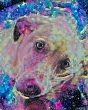 Dog_4348