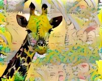 Giraffe _4350