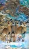 Deer_4399
