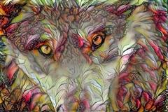 Wolf_4422