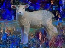 Lamb _4478