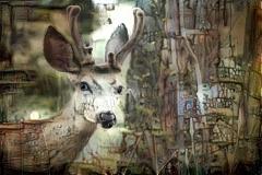 Deer_4487