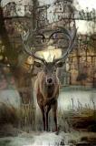 Deer_4490