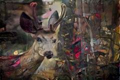 Deer_4492