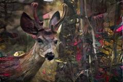 Deer_4495