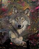 Wolf _4498