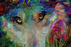 Wolf_4506
