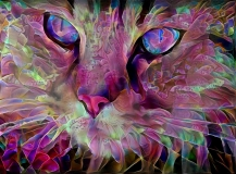 Cat_4554