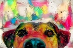 Dog_4645